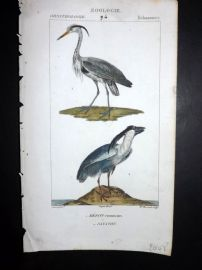 Turpin C1820 Hand Col Bird Print. Common & Boat Billed Heron 94